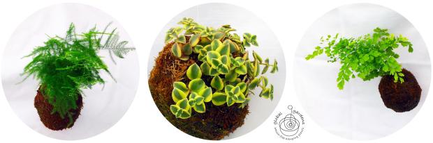 global-gardens-web-shot-for-wordpress-1-watermark